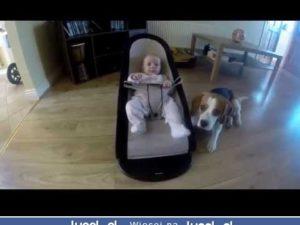 Uśmiech psa znajduje się w jego ogonie:)