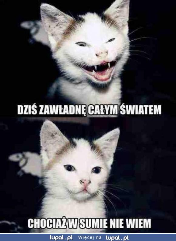 Niezdecydowany kotek