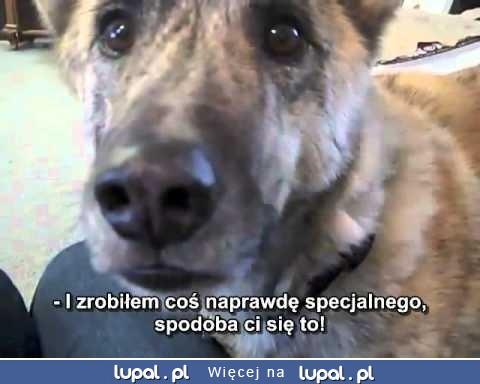 Jak można się tak znęcać nad psem?? :(