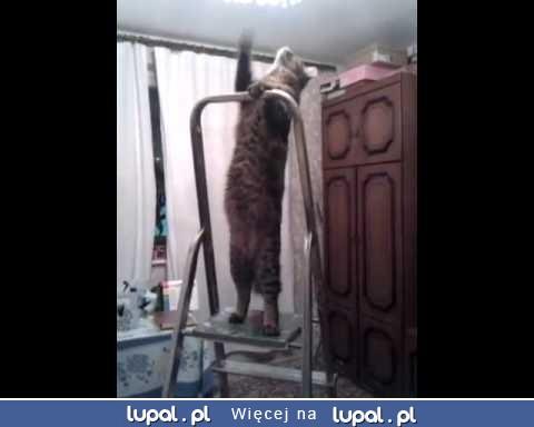 Czy wiesz co robi kot kiedy zostawiasz go samego?