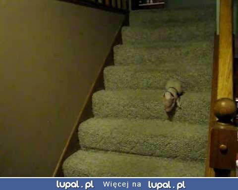 Świnka pomyka po schodach