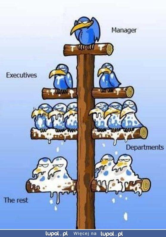 Hierarchia w firmie